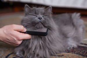 How Often Should I Brush My cats