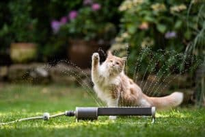 How To Keep Your Cat In Your Yard