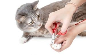 How To Trim A Squirmy Cats Nail
