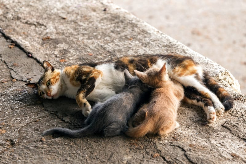 What Does A Mother Cat Do With A Dead Kitten?
