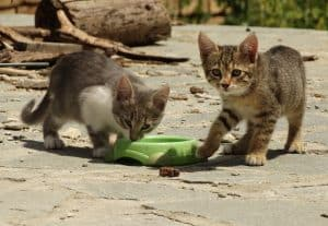What Happens If I Stop Feeding Stray Cats?