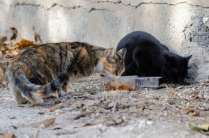 What To Feed Stray Cats