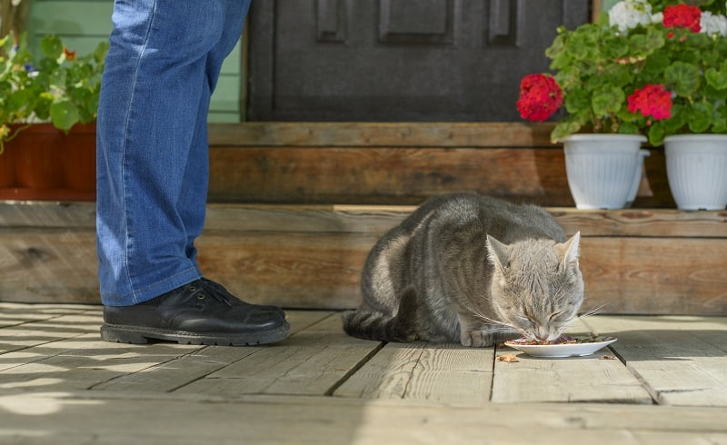 Why Do Cats Want You To Walk Them To Their Food