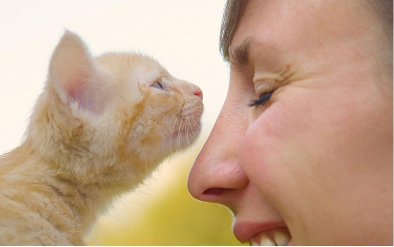 Why Does My Cat Sniff My Face?