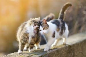 Are Male Or Female Cats More Affectionate