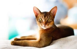 Are Tabby Cats Smart?