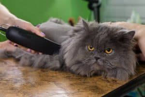 How To Shave A Long Haired Cat