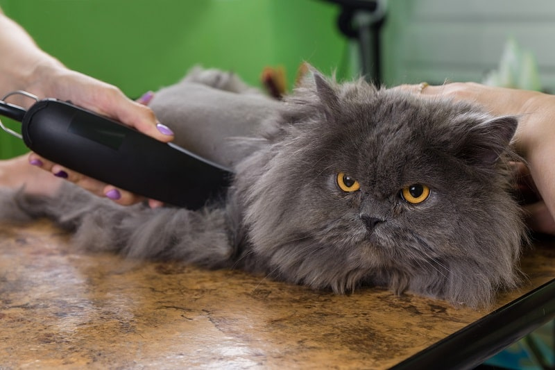 How To Shave A Long Haired Cat?