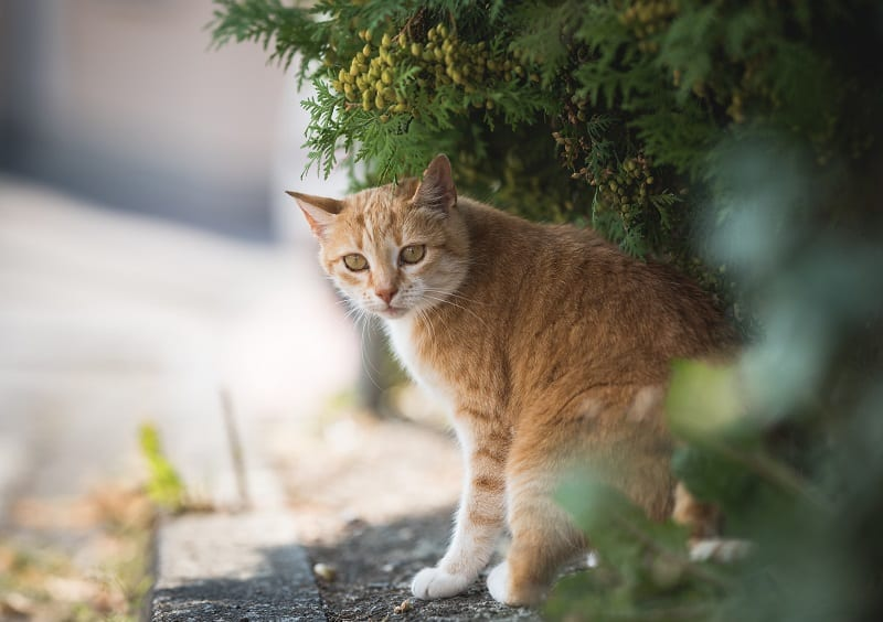 Why Do Cats Disappear For Days At a Time?