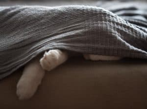 Why Do Cats Hide When They Are Sick