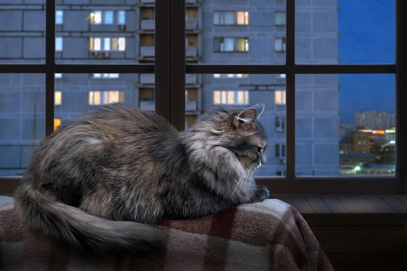 Why Do Cats Make Weird Noises at Night?