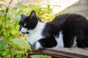 Black Specks in Cat Fur Not Fleas