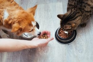 Can Cats Eat Dog Food in an Emergency