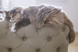 Cat Fur Changing Color