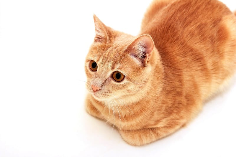 Cat Loaf – What Does It Mean?