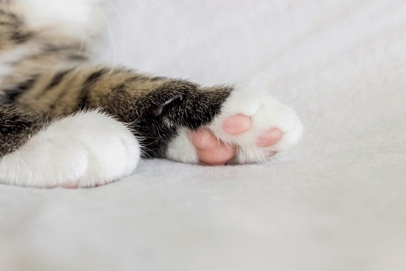 Cat Paw Pads Change Color