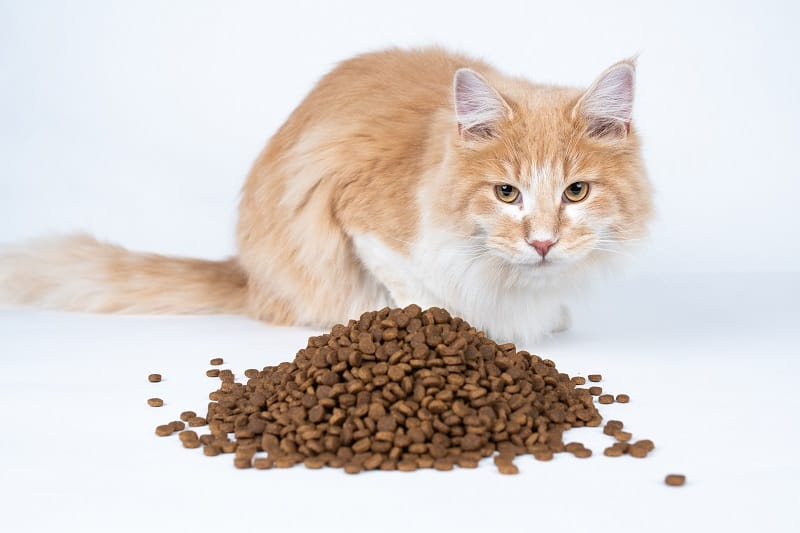 Does Cat Food Expire
