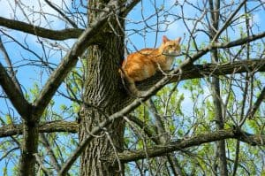 How Long Can A Cat Stay In A Tree