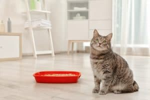 How to Clean a Litter Box in an Apartment