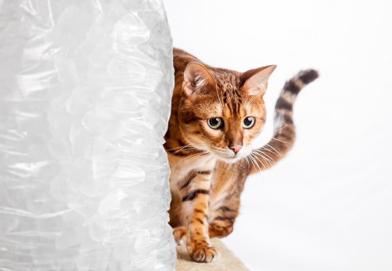Is Ice Bad for Cats