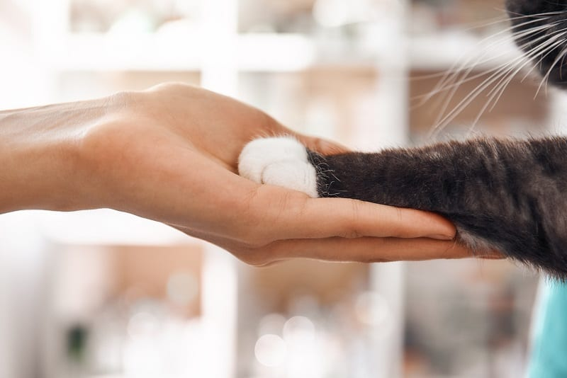 What Does It Mean When a Cat Lets You Touch Its Paws