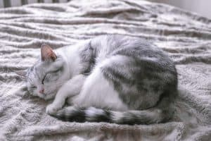Why Do Cats Curl Up