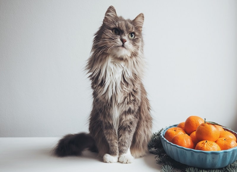 Why Do Cats Hate Citrus