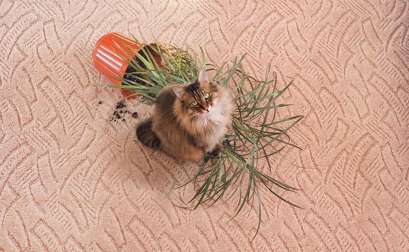 11 Disadvantages of Having a Cat