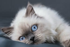 Are All Kittens Born With Blue Eyes