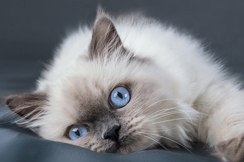 Are All Kittens Born With Blue Eyes?
