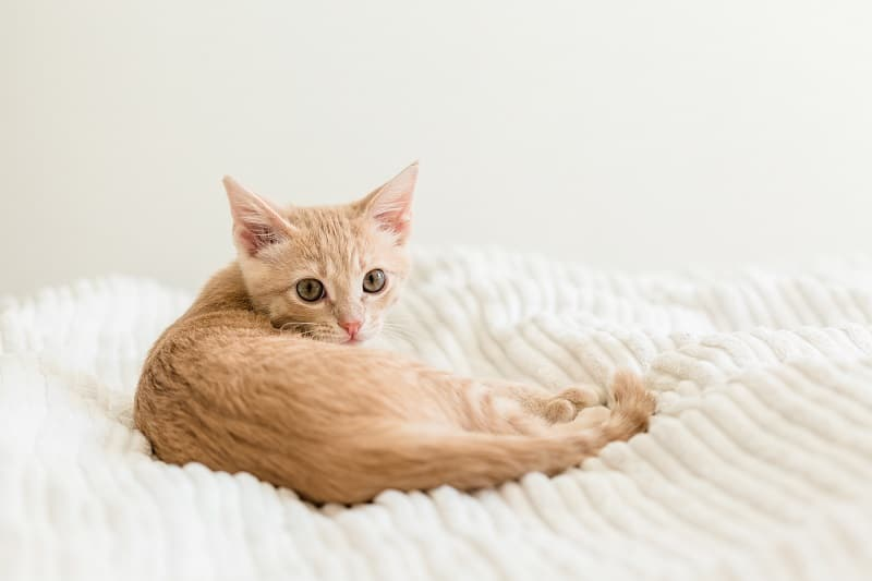 Are Heating Pads Safe for Cats?