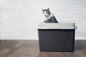 Do Cats Like Top Entry Litter Boxes?