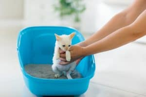 How Long Does It Take to Potty Train a Kitten?