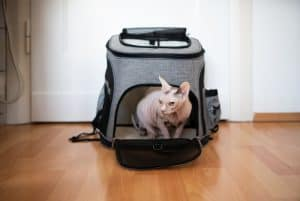 How Much Does a Cat Carrier Cost