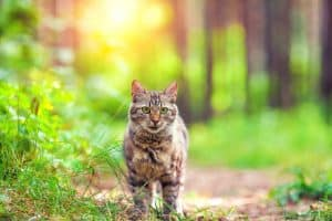 How to Catch a Feral Cat Without a Trap?