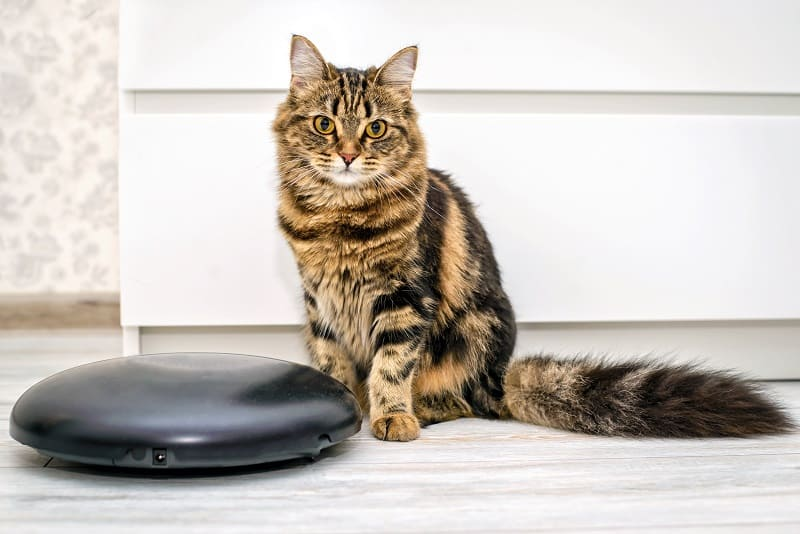 Why Do Cats Ride Roombas