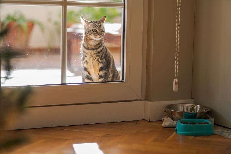 Will My Cat Come Back If I Let Him Outside