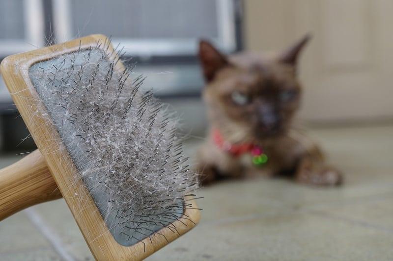 4 Cat Dandruff Home Remedies