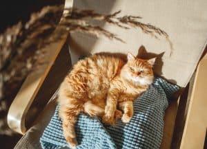 Do Cats Need Sunlight?