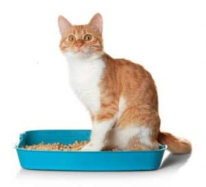 How Do I Stop My Cat From Sleeping in the Litter Box