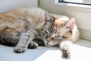 How Long To Quarantine Cat With Ringworm?