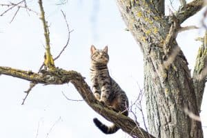 How To Keep A Cat From Climbing A Tree?
