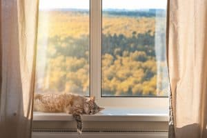 How To Keep Cats Off Curtains