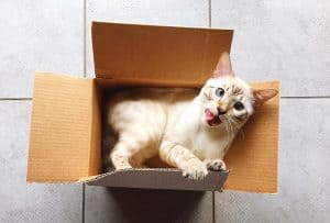 How to Catch a Smart Cat