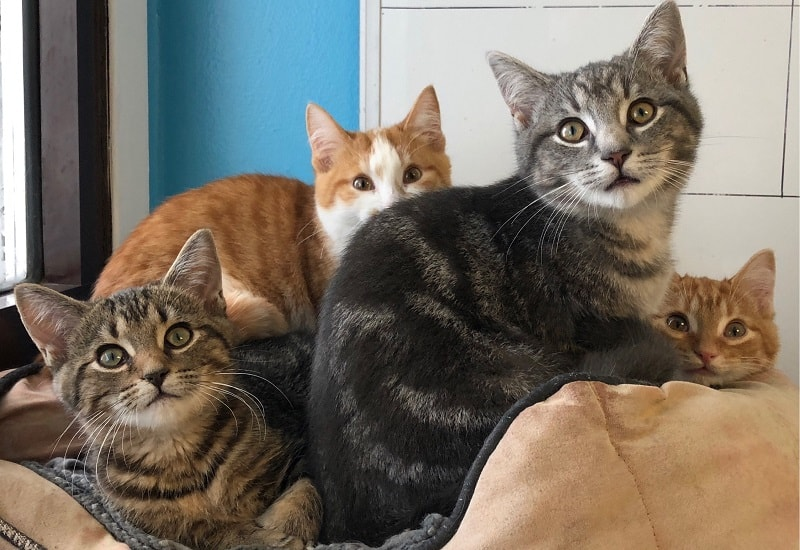 How to Get a Cat to Lose Weight With Multiple Cats?