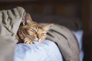 How to Keep Cats Off Bed at Night