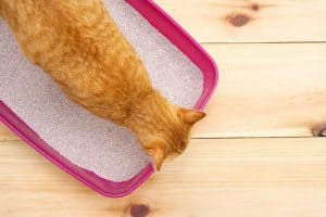 Is Clumping Litter Bad For Cats