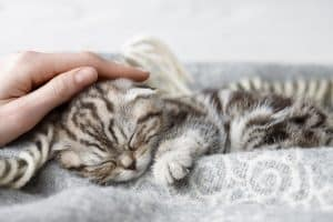 Why Do Cat Purr When You Stroke Them?