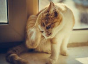 Why Do Cat Scratches Burn?