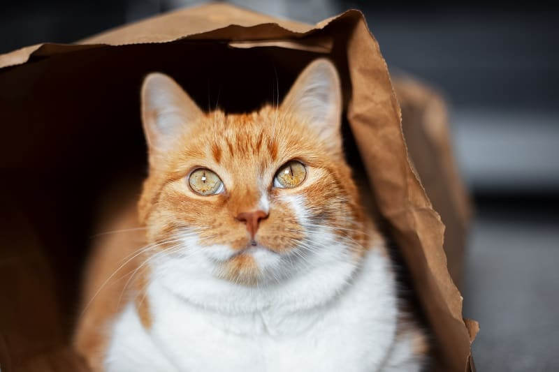 Why Do Cats Like Crinkly Things?